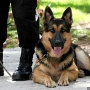 Vermont police dogs no longer trained to detect marijuana